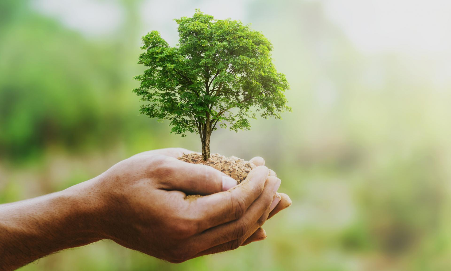 Écologie et Sensibilisation